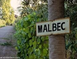 malbec2