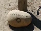 806862_chardonnay