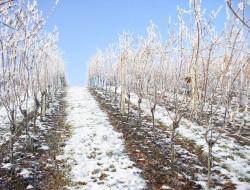 zima-vinice