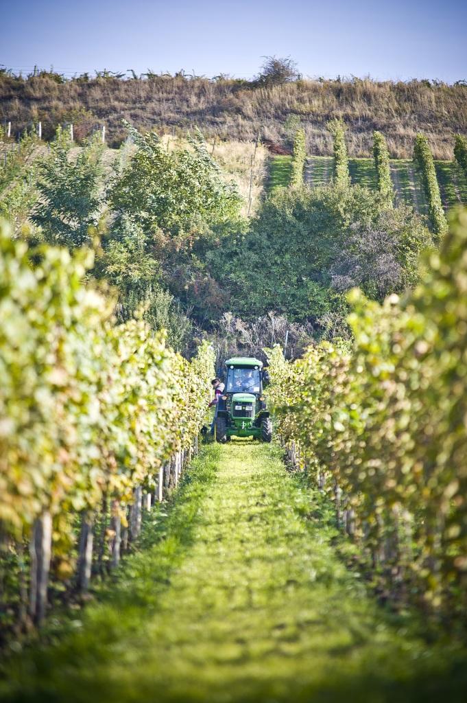 vinice-brezi