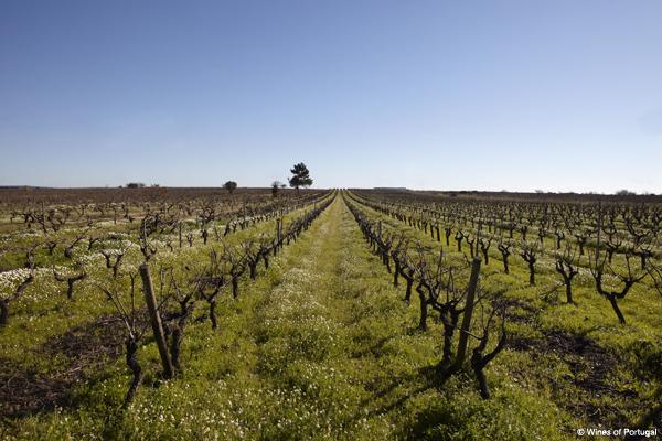 portugal-wine