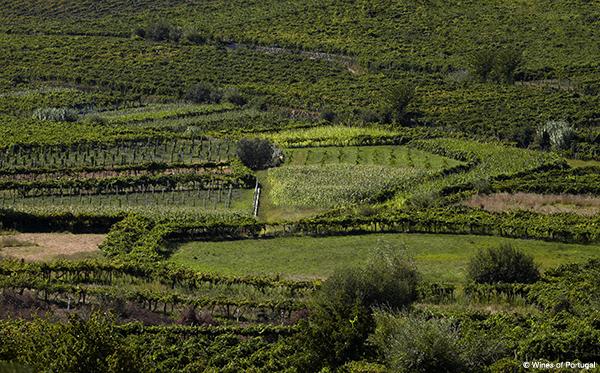 vinho-verde