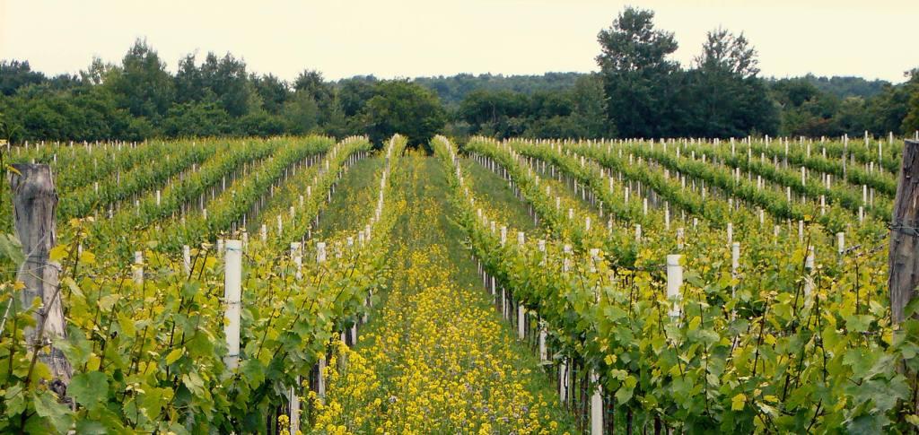 vinařství-Špetíci-Hnanice-07-1