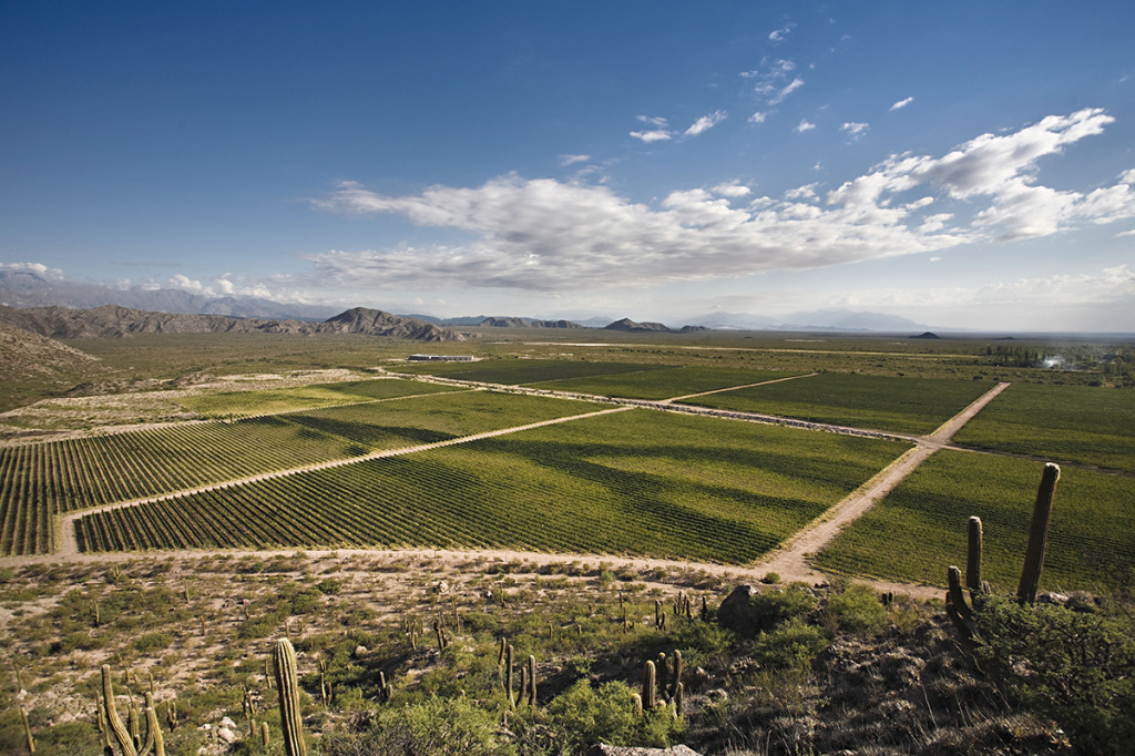 Relevamiento vitivinícola zona Norte Wines of Argentina Chañarmuyo