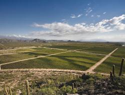 Relevamiento vitivinícola zona NorteWines of ArgentinaChañarmuyo