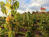 vinice-sv-klary